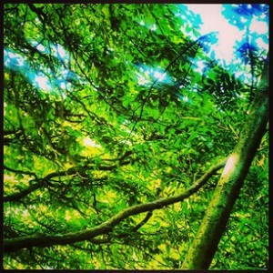 Botanic gardens - tree canopy
